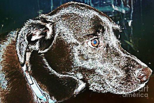 Labrador Retriever   by Judy Palkimas