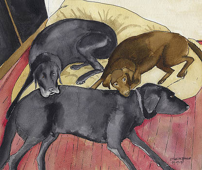 Labrador Retrievers resting at home by Ethan Altshuler