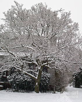 Lacy Snow by Linda Zolten Wood