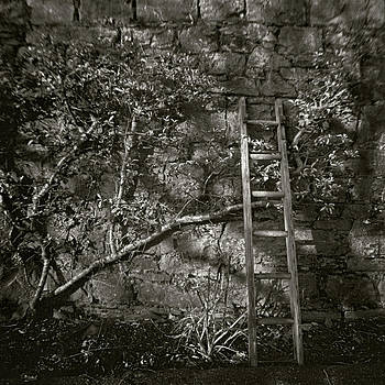 Ladder by Joseph-Philippe Bevillard