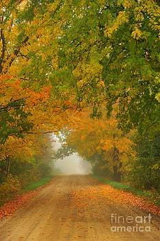 Terri Gostola - Low Autumn Tunnel