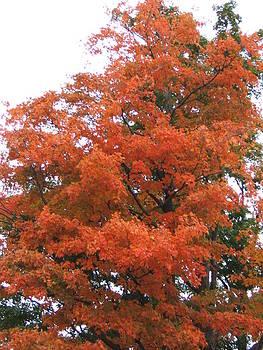 Lady Autumn - Tree by Margaret McDermott