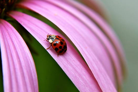 Lady Bug by Judd Connor