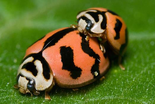 Lady bugs in sex by Jordan Lye