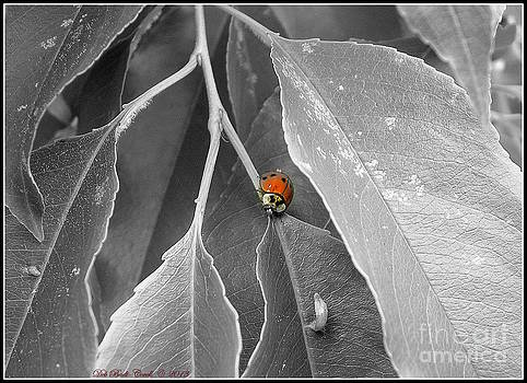 Lady in Red by Deb Badt-Covell