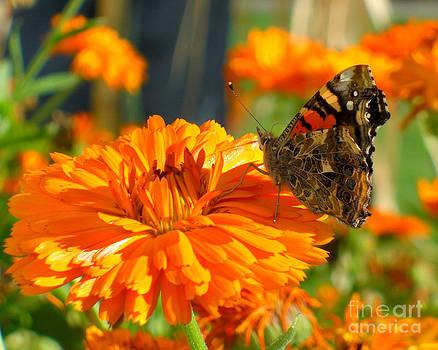 Lady On Orange by Heidi Manly