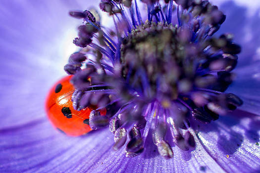 Ladybird having a snooze by Andrew Lalchan