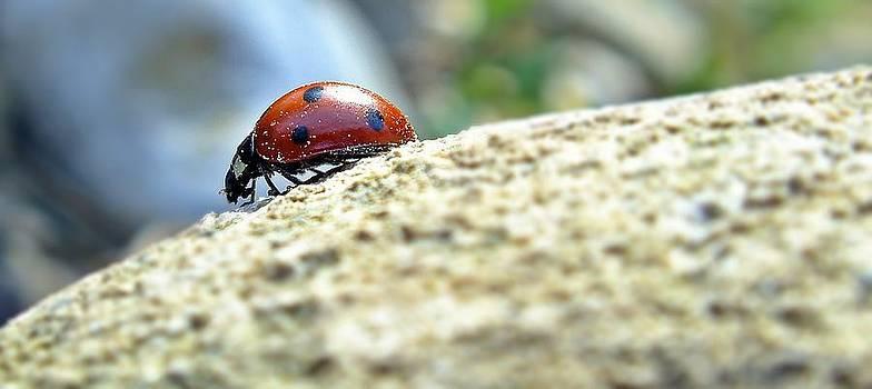Ladybird by Kazim Yurekli