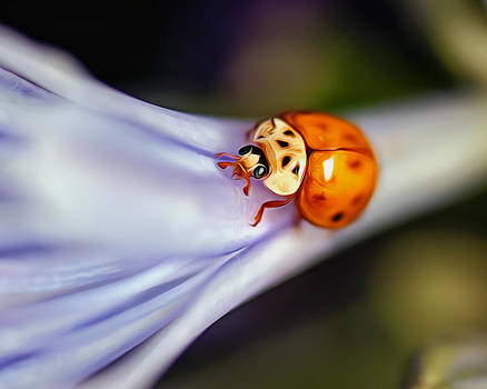 Ladybug Art by Tammy Smith