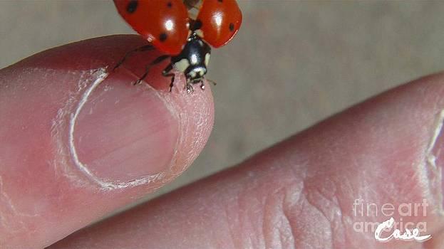 Feile Case - Ladybug Bittersweet Kisses 1