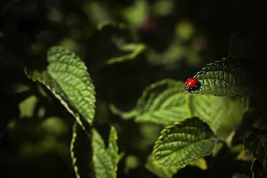 Ladybug by Bradley R Youngberg