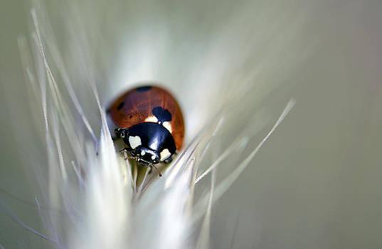 Ladybug... by Ckworkshop