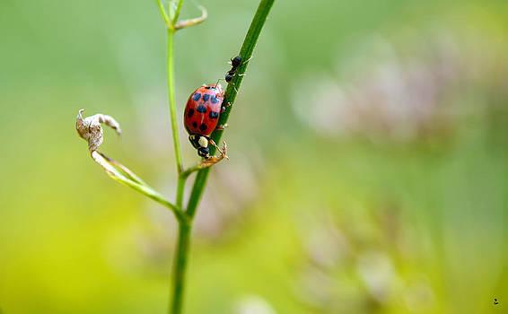 Ladybug Friend by Minartesia