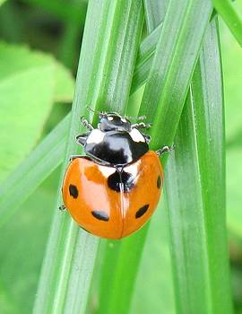 Ladybug by Heather Gordon