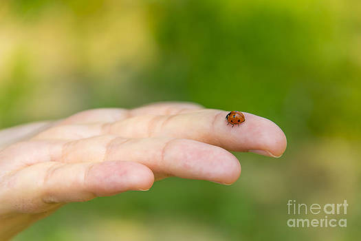 Ladybug in an hand by Stefano Piccini