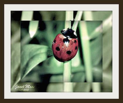 Ladybug by Janet Moss