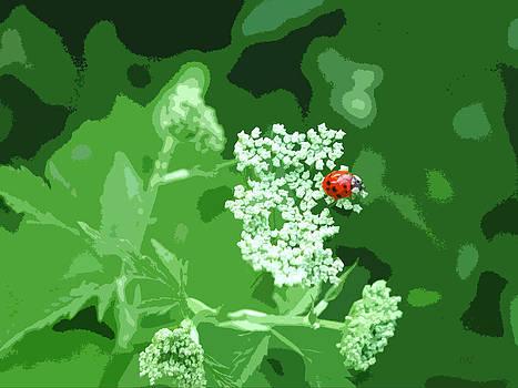 Ladybug Ladybug by David Schneider