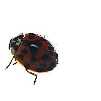 Ladybug Love by Krista Hudson