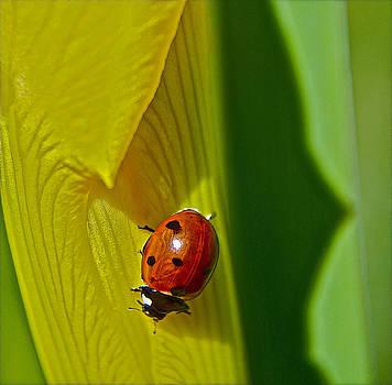 Bill Owen - Ladybug Macro