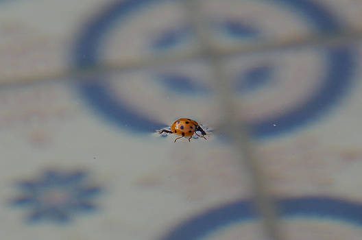 Ladybug of the Water by Kristin Clarke