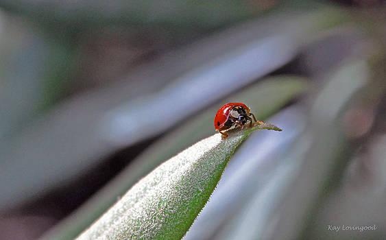 Kay Lovingood - Ladybug on a Leaf