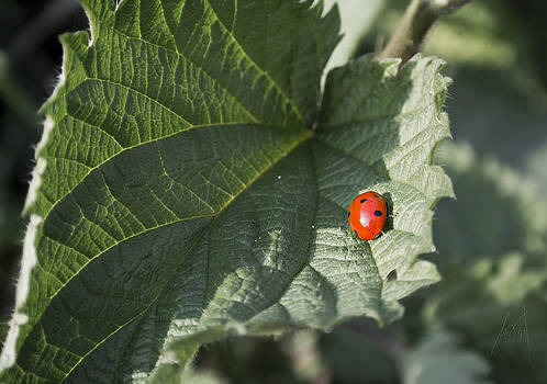 Ladybug and Nettle by Milan Pilipovic
