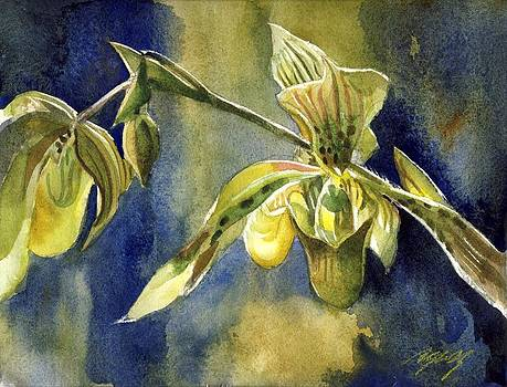 Alfred Ng - ladyslipper orchid with blue