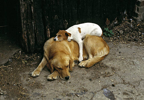 Laid Back Dogs by David Davies