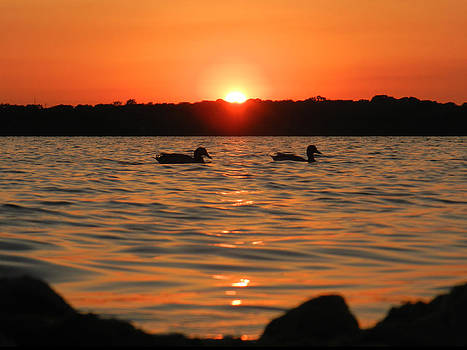 Lake Arlington at Dusk by Mamie Thornbrue