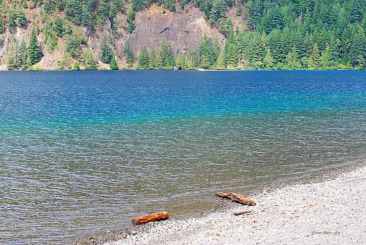 Connie Fox - Lake Crescent Shore