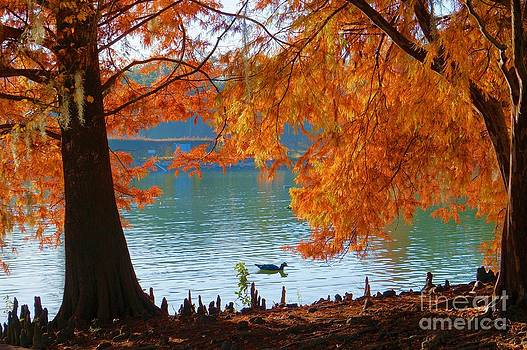 Lake Ella Morning by Gail Kent