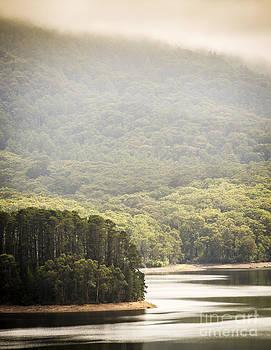 Tim Hester - Lake Forest