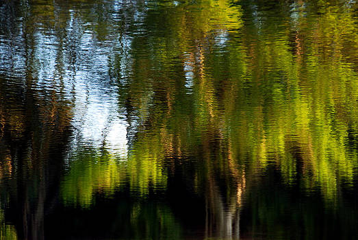 Lake In Green by Lorenzo Cassina
