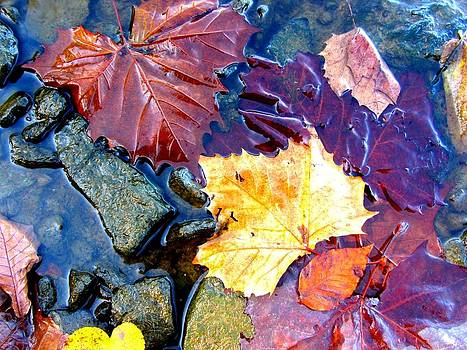 Lake Leaves by Andie Meek