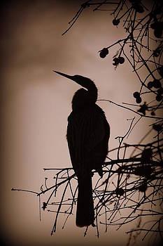 Laurie Perry - Lake Morton Silhouette III