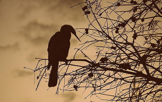 Laurie Perry - Lake Morton Silhouette