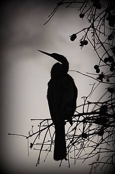 Laurie Perry - Lake Morton Silhoutte IIII
