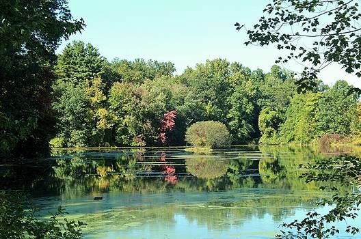 Lake Reflection by Rita Tortorelli