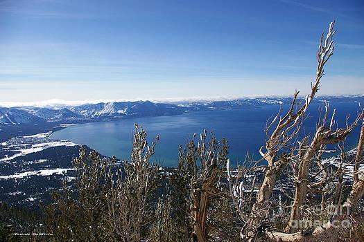 Tannis  Baldwin - Lake Tahoe