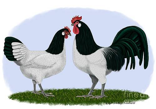 Lakenvelder Rooster and Hen by Leigh Schilling