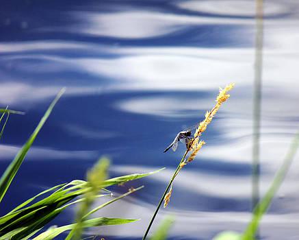 Connie Zarn - Lake