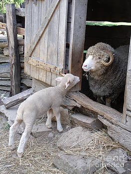 Lamb and Ram at Lincoln Log Cabin State Historic Site in Coles Co IL by Michael Madlem