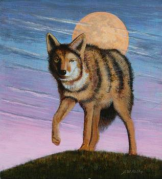 Lame Coyote by J W Kelly