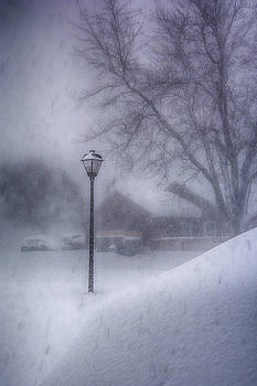 Lamp Post in the Snow by Guy Whiteley