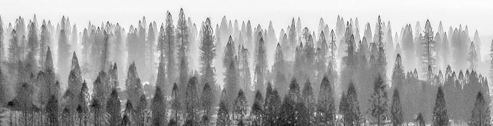 Lanai City Norfolk Pines by Jonica Hall