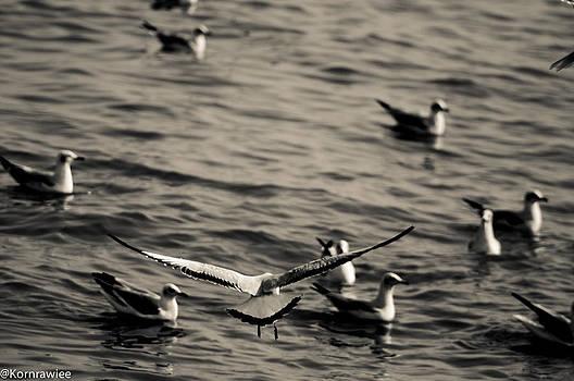 Landing... by Kornrawiee Miu Miu