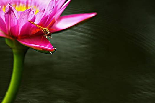 Landing by Suradej Chuephanich