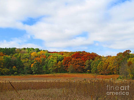 Minding My  Visions by Adri and Ray - Landscape Featuring Colorful Fall Foliage