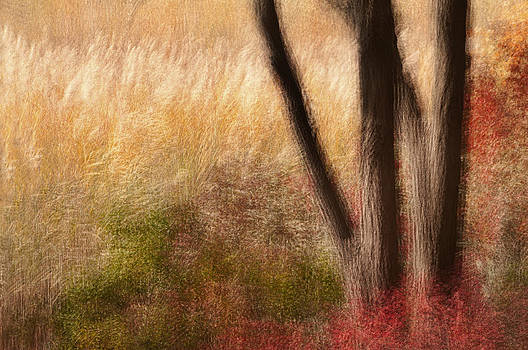 Landscape in Motion by Jay Krishnan