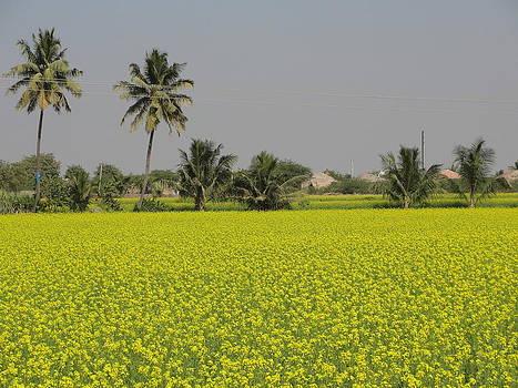 Landscape by Makarand Kapare